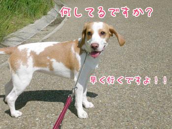 20070521120208.jpg