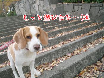 20071123185114.jpg