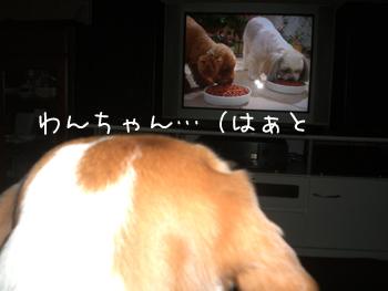 cmにも犬のコピー