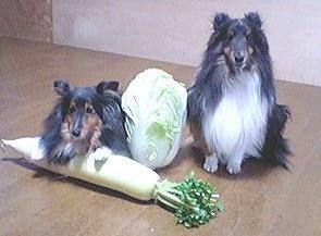 20070114ozenzaiyasai2.jpg