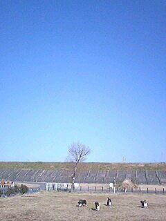 20070130aozora.jpg