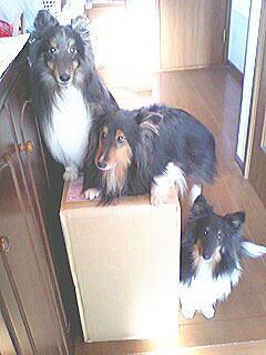 20070130bigbox.jpg