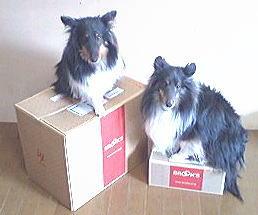 20070312brooks.jpg