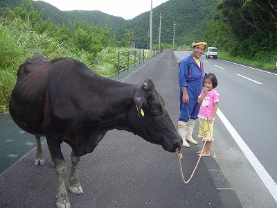 牛は ゆっくり 歩きたい時に 歩く