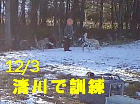 12.3清川
