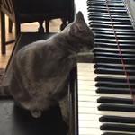 猫のピアニスト