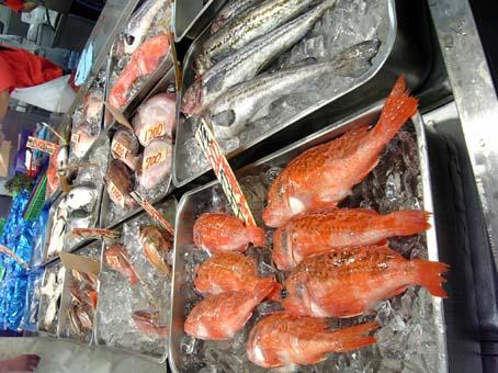 角上魚類06