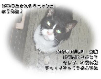 haru_sense.jpg