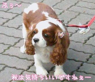 nene_1012.jpg