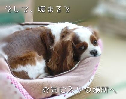 nene_10_252.jpg