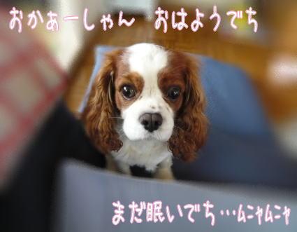 nene_10_31.jpg