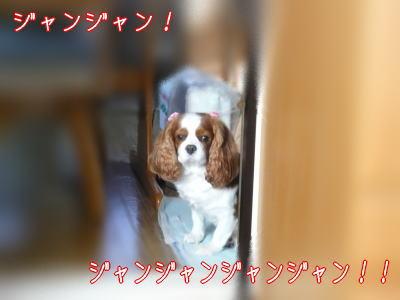 nene_11_13.jpg