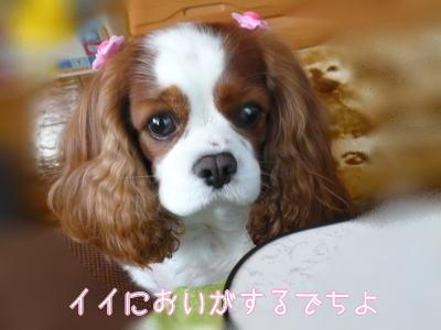nene_11_13_3.jpg