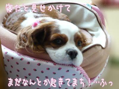 nene_11_28_4.jpg