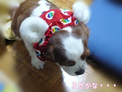 nene_11_29_2.jpg