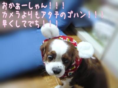 nene_11_29_3.jpg