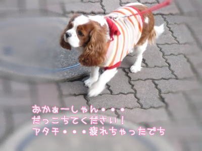 nene_11_4.jpg