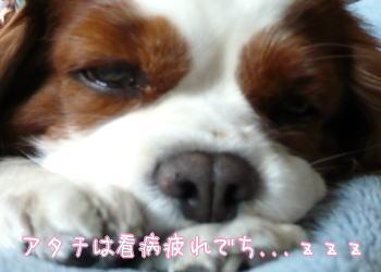nene_12_11_2.jpg