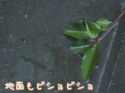 nene_12_13_2.jpg