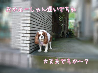 nene_12_14_7.jpg
