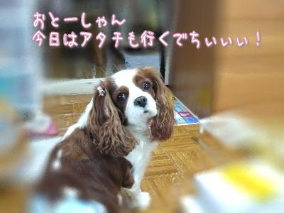 nene_12_17.jpg