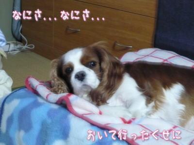 nene_12_17_2.jpg