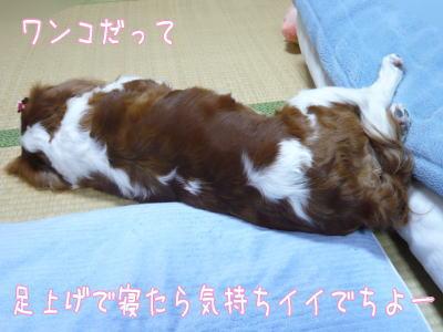 nene_12_1_6.jpg