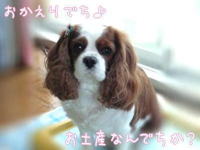 nene_12_4.jpg