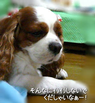 nene_9_22.jpg