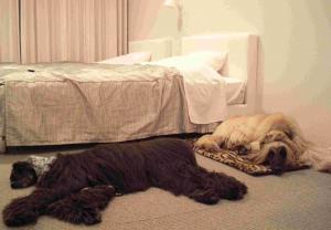 Hotel Dog Legs