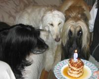 オルフェのお誕生日