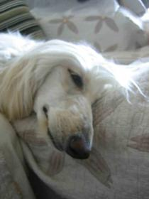 眠っているセナ