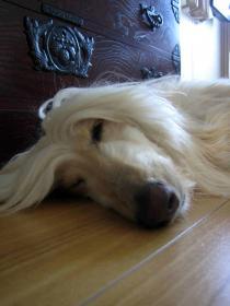 キュートな寝顔