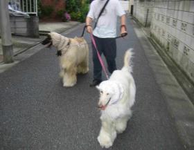 歩こう、歩こう!