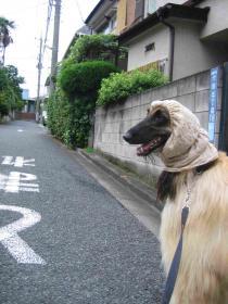 僕はお散歩大好き!