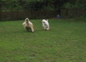 走る!走る!