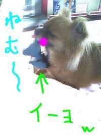 mimi73.jpg