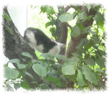 木登りちびたん