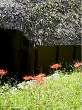 茅葺き屋根と彼岸花