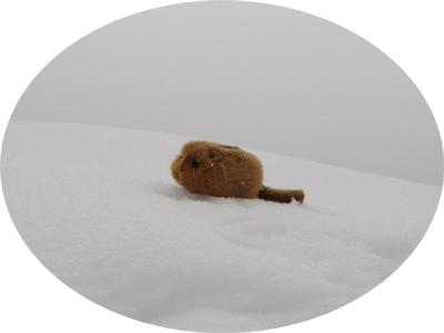 雪の中のピエール