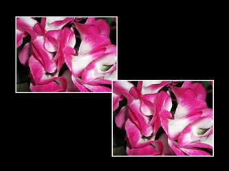 CIMG0434_20071214021043.jpg