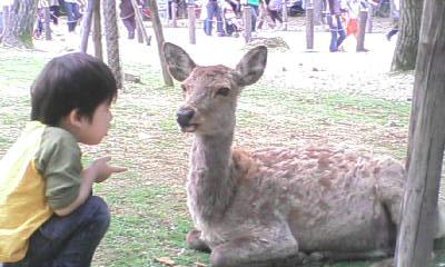 子供と鹿の写真を撮っちゃいましたw