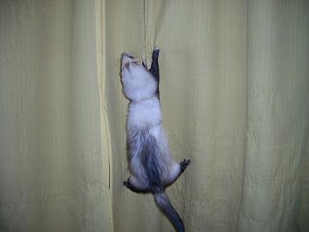 ジャスミンのカーテン登り