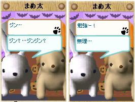 20061020_3.jpg