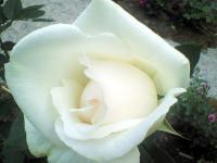 2007.6.12_8.jpg
