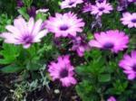 flower_8.jpg