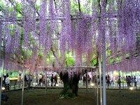 fuji_8.jpg
