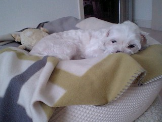 fujiko sleep