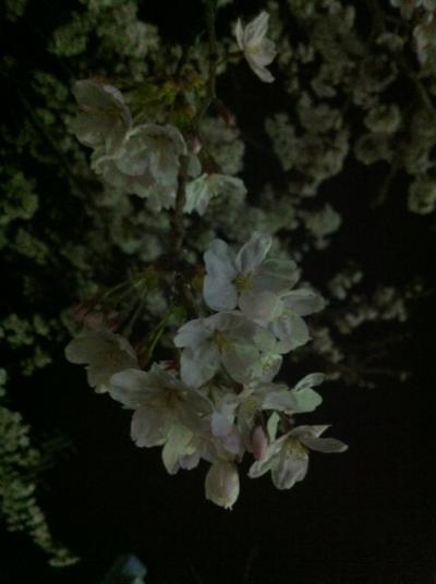 夜桜天神川