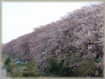 asuwa0604-1(350).jpg